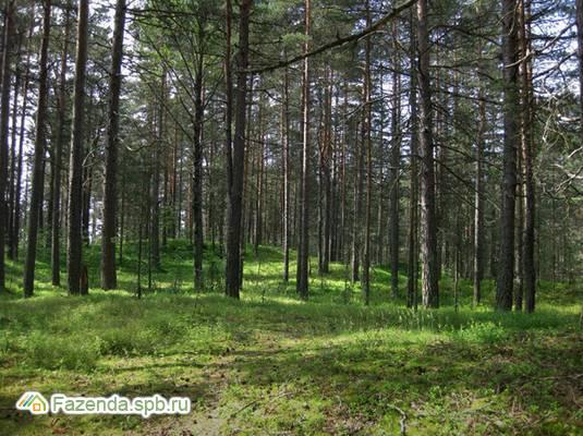 Коттеджный поселок  Балтийская Ривьера, Выборгский район.