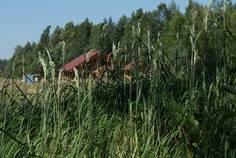 Рядом с Ленинская Слобода расположен Коттеджный поселок  Малое Репино