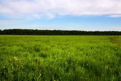 Рядом с Зеленая Долина расположен Коттеджный поселок  Зарянка