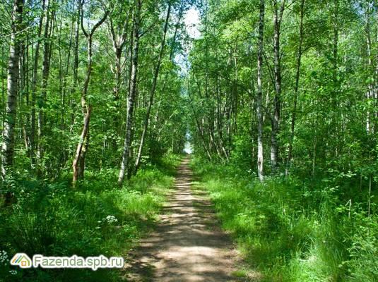 Коттеджный поселок  Малиновка 3, Выборгский район.