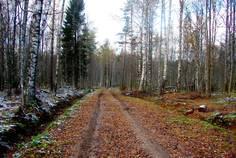 Рядом с Дача у Игоры расположен Коттеджный поселок  Черничное
