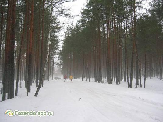 Коттеджный поселок  Череменецкое, Лужский район.