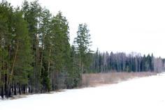 Рядом с Былины расположен Коттеджный поселок  Череменецкое