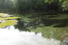 Рядом с Имение Оржицкого расположен Коттеджный поселок  Три ручья