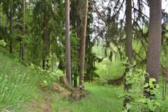 Рядом с Строгановская Усадьба расположен Коттеджный поселок  Сиверская Мелодия
