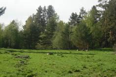 Рядом с Скала расположен Коттеджный поселок  Финский Хутор