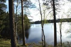 Рядом с Лебяжье озеро расположен Коттеджный поселок  Хвойный