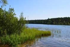 Рядом с Балтийская Ривьера расположен Коттеджный поселок  Красноозерное-2