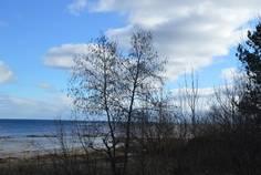 Ближняя пристань Март 11, 2014, 5:34 п.п.