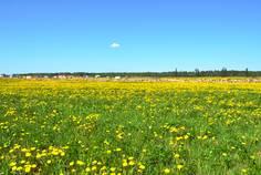 Рядом с Медовая поляна расположен Коттеджный поселок  Белые ночи