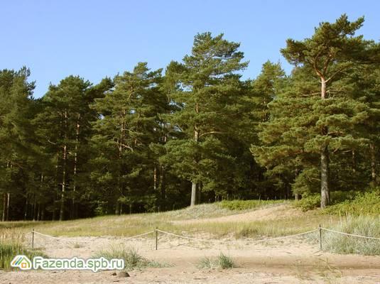 Коттеджный поселок  NIRVANA, Курортный район СПб. Актуальное фото.