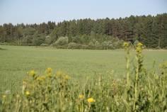 Рядом с Гатчинские Поместья 2  расположен Коттеджный поселок  Лесной Уют