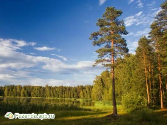 Коттеджный поселок  Агалатово-3, Всеволожский район. Актуальное фото.