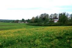 Рядом с Golden Park Шувалово расположен Коттеджный поселок  Софийские Сады