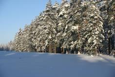 Коттеджный поселок Жемчужина Карелии от компании Русь