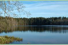 Рядом с Лебяжье озеро расположен Коттеджный поселок  Лебяжий хутор