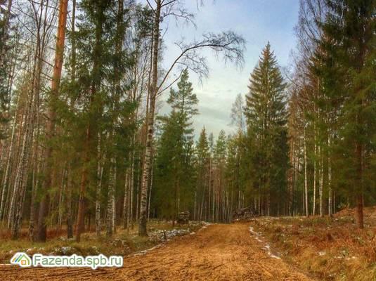 Коттеджный поселок  Лесной Хутор, Всеволожский район.