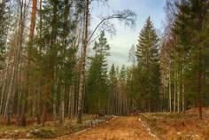 Рядом с Новое Сертолово расположен Коттеджный поселок  Лесной Хутор