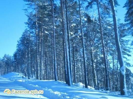 Коттеджный поселок  Золотые пески, Выборгский район.