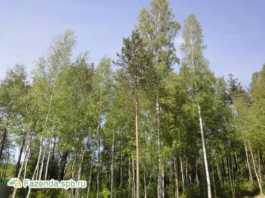 Коттеджный поселок  Приветное, Выборгский район.