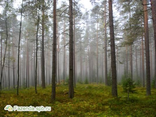 Коттеджный поселок  Озеро Утиное, Выборгский район.