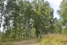 Рядом с Черничный расположен Коттеджный поселок  Полесье