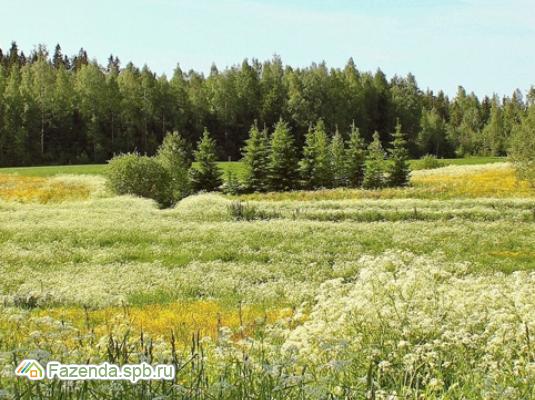 Коттеджный поселок  Вырицкая Мыза, Гатчинский район.