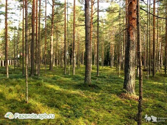 Коттеджный поселок  Репинские дачи, Выборгский район. Актуальное фото.