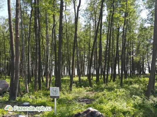 Коттеджный поселок  Пески-29, Выборгский район.