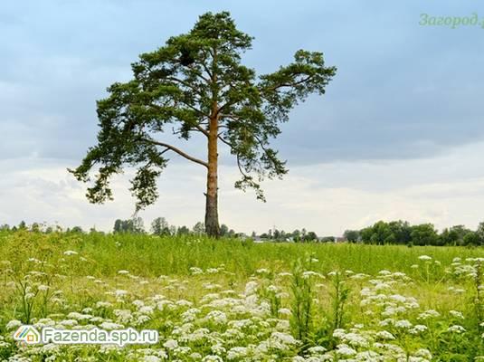 Коттеджный поселок  Иннола парк, Ломоносовский район.