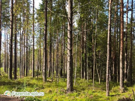 Коттеджный поселок  Лес, Выборгский район.