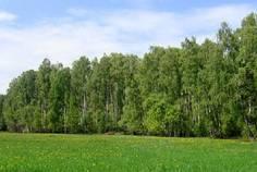 Коттеджный поселок Петергофская рапсодия от компании LandInStock