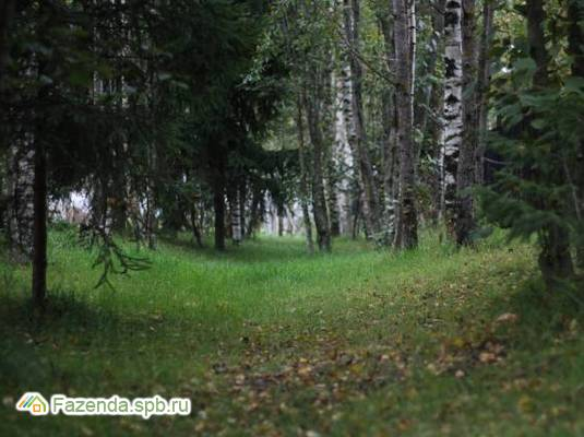 Коттеджный поселок  Земельные участки в Мистолово, Всеволожский район. Актуальное фото.