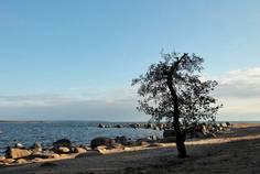 Коттеджный поселок Приморск от компании ВикингСтройИнвест