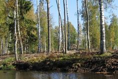 Рядом с Лемболовские Просторы 2 расположен Коттеджный поселок  Стеклянный ручей