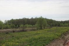 Рядом с Цветочное расположен Коттеджный поселок  Лесная поляна