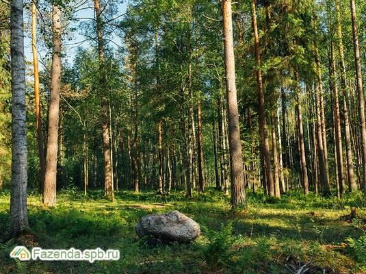Коттеджный поселок  Репино Парк, Выборгский район.