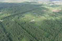 Рядом с Ропшинские пруды расположен Коттеджный поселок  Радуга