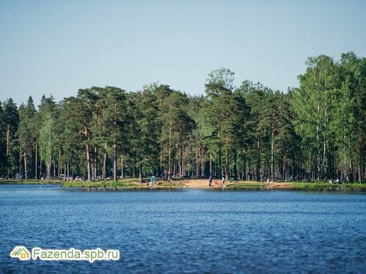 Коттеджный поселок  Кокосы, Всеволожский район. Актуальное фото.